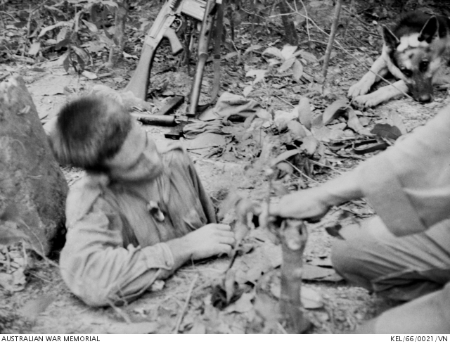 In 1966, a Sapper of 3 Field Troop emerges from a Viet Cong (VC) tunnel by a trapdoor in the ground during Operation Crimp in the Ho Bo Woods with troops of 1 Battalion, The Royal Australian Regiment (1RAR). The trapdoor of concrete is covered with earth and grass and saplings are grown in it so that it carefully blends in with the rest of the vegetation, and is virtually impossible to detect.